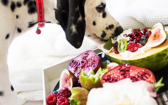Foods You Should Never Give to Your Dog